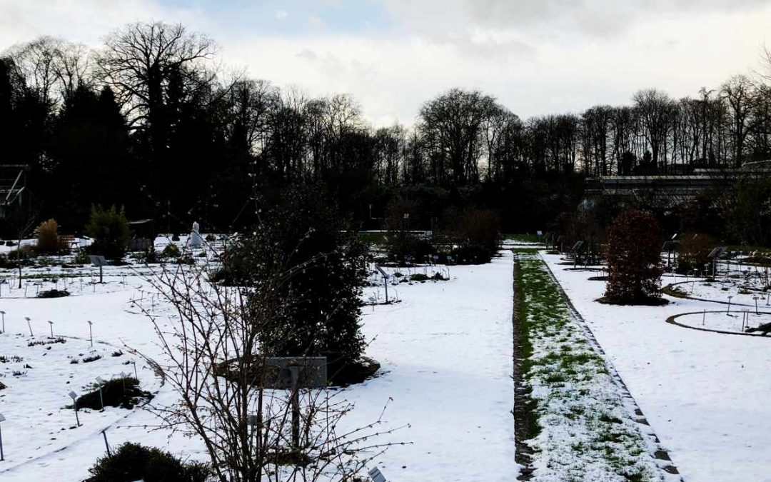 Gartenplanung im Winter